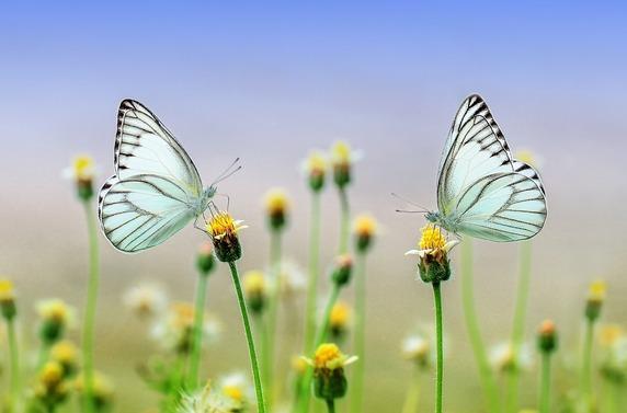 l'âme papillon