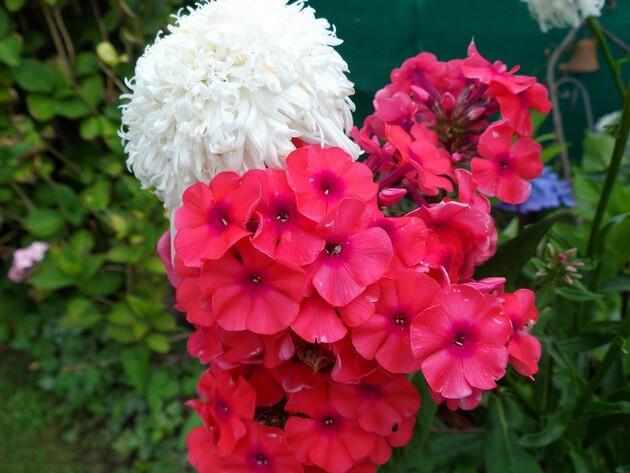 et puis le jardin se pare de couleurs