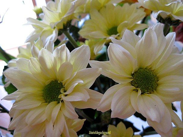 Fleurs-1295.JPG