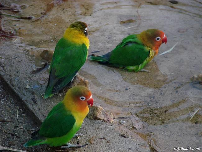 Oiseaux_exotiques_3D_c07___20