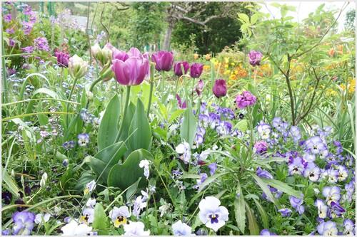 Giverny : le jardin de Monet  2/3