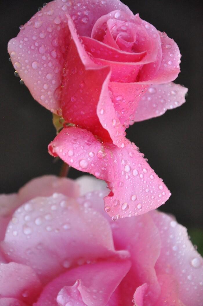 Les plus belles fleurs du monde
