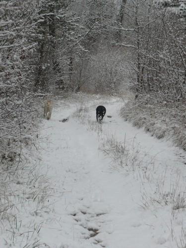 ut+ch neige