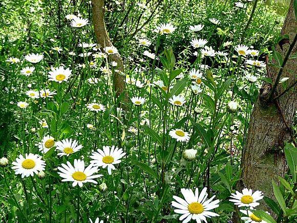 fleurs1.06-128.JPG