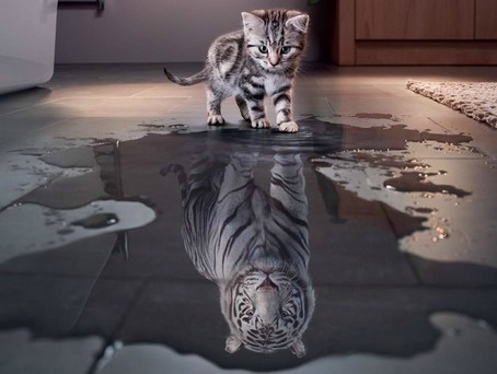 http://ekladata.com/G2Kn705YHl23PAxAp87yZHNpWDI/tigre.jpg