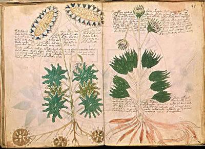 Le livre mystérieux - Manuscrit-de-Voynich