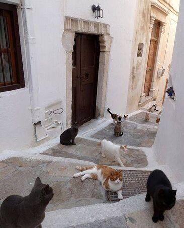 05 - Des chats en couleurs
