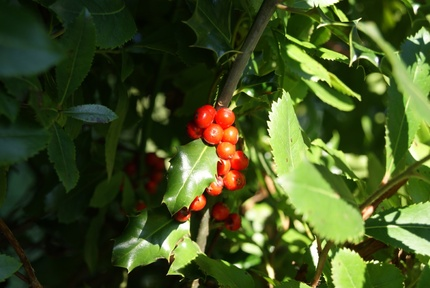 Achats d'automne pour le jardin.