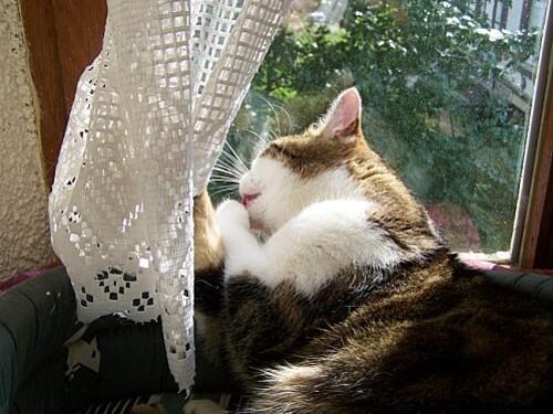 Mousse tire les rideaux mai 2011 4