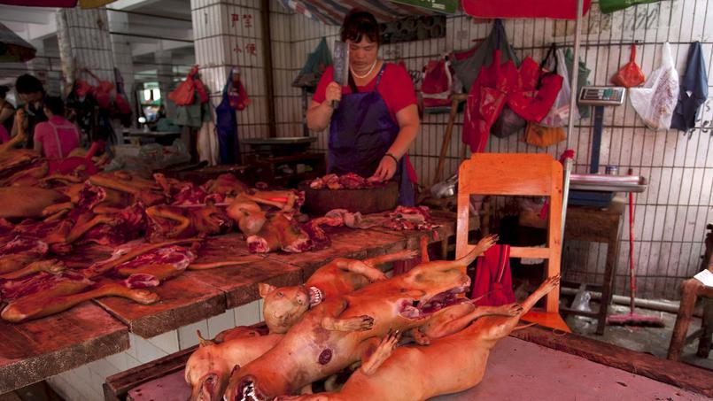 viande pour chien