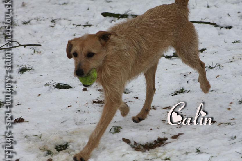 Calin - Nouvelles photos