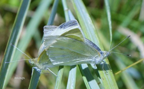 La fin de l' été ...  encore quelques papillons .