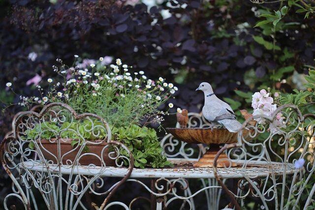 Le jardin comme exutoire (12)