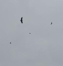 Les corniches et les vautours