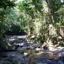 La rivière qui traverse l'Habitation (1) - Photo : Hervé (2003)