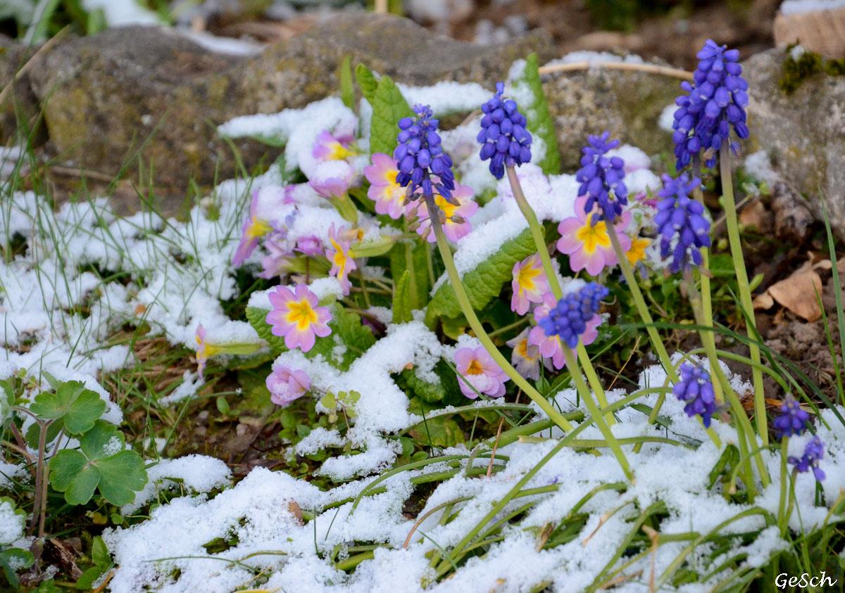 alsace neige avril 2021