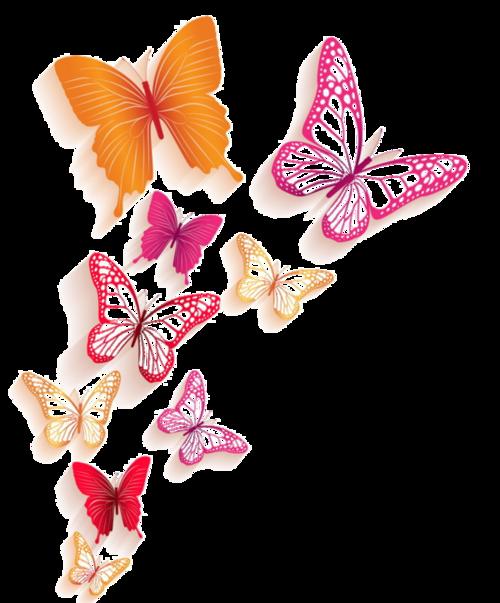 Tubes papillons en png