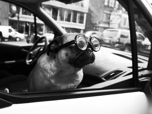 01 - Dogs and car