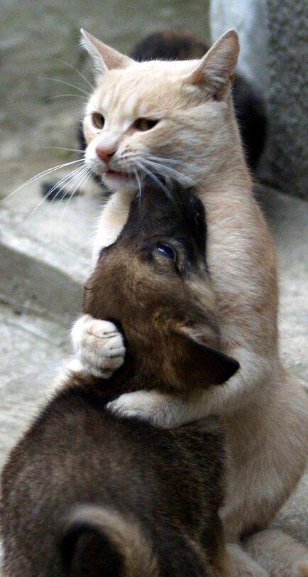 Amour de chat <div class=