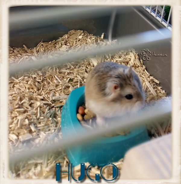 Hugo ............