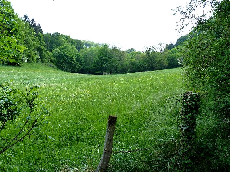 Moselle / L'étang de la Folie à Gorze...