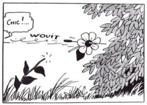 fleur-decapitee.jpg
