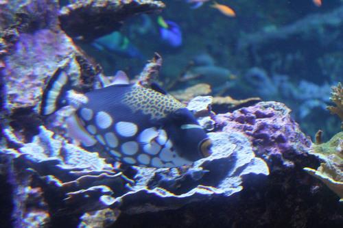 La Cité de la Mer : un bel aquarium