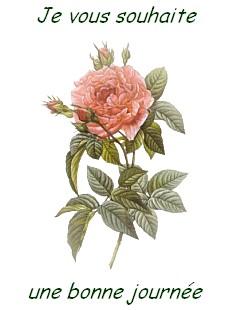 FLEUR rose Je vous souhaite une bonne journée