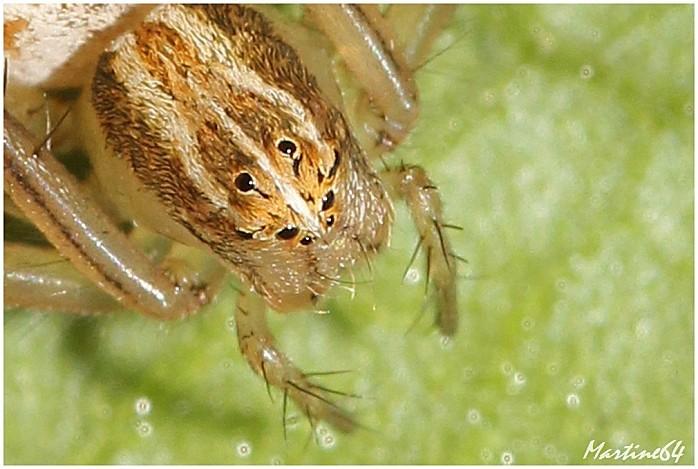 Arachnides-04-7196b.jpg