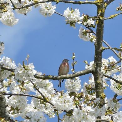 Une hirondelle fait le printemps...