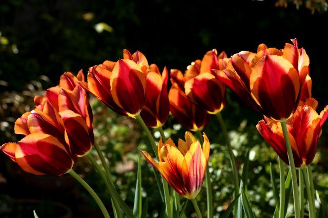 Tulipes 2016 : Slawa