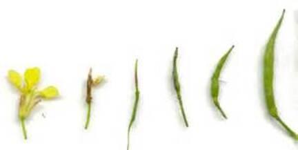 Thème 2: Chapitre 4: Des changements au cours de la vie d'un végétal