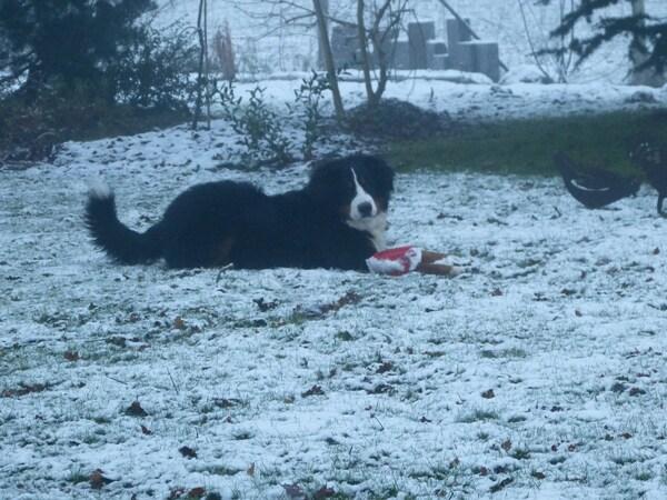 Jasper et la neige