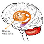 Un modèle neurologique du trouble obsessionnel-compulsif confirmé