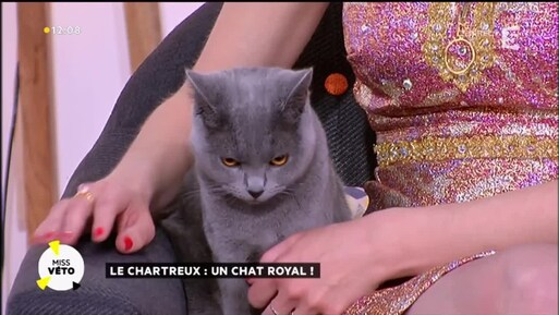Madame et son chat !