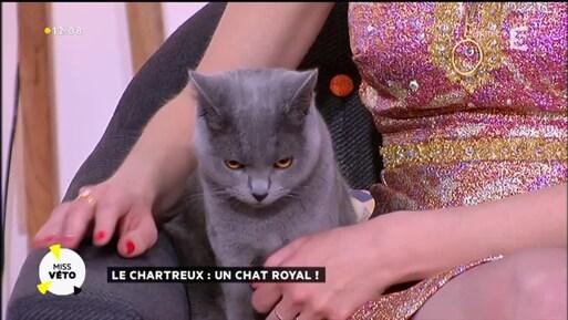 Madame et son chat !