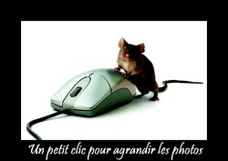 Quand on aime......