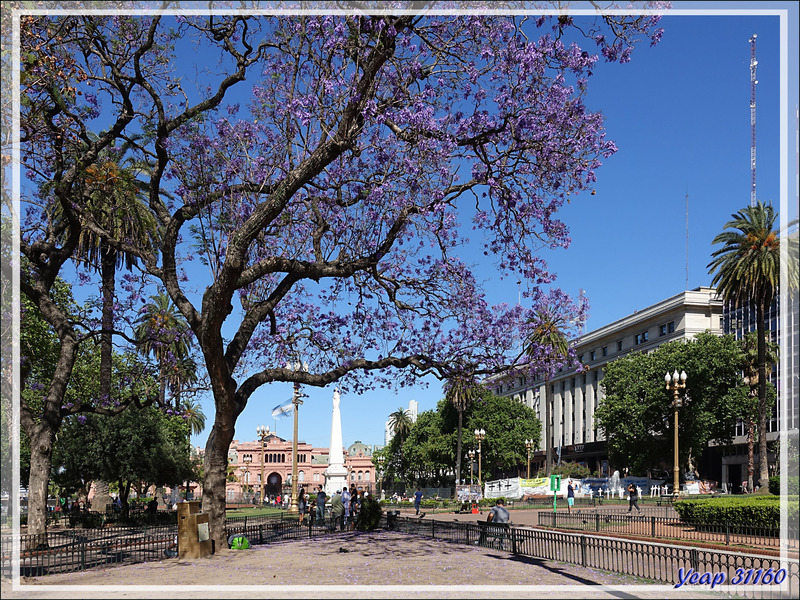 Autour de la Place de Mai (Plaza de Mayo) - Buenos Aires - Argentine