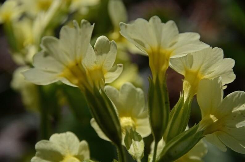 Fleurs-12-0518_modifie-1.jpg