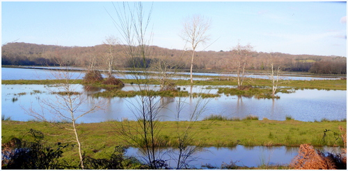 Les  étangs marécageux
