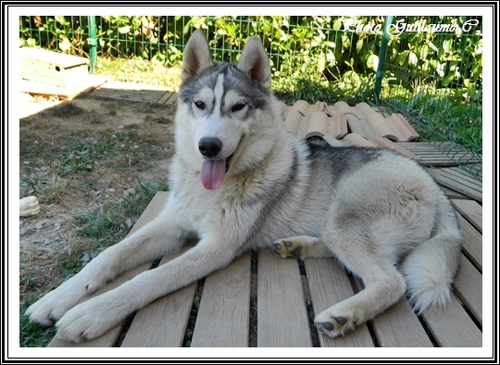 Ianko (8 mois)