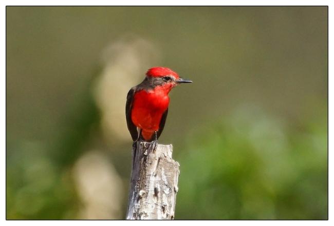 Oiseaux 4