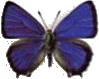Les papillons de jour