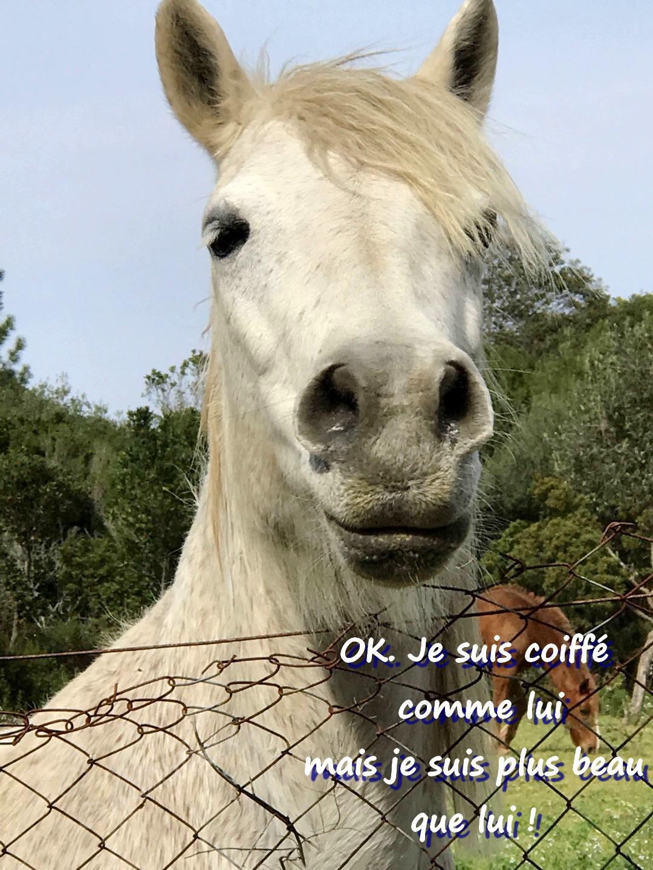 Un peu d'humour - Chevaux dans la prairie