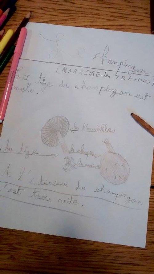 Nature studies / observation de la nature:  les champignons