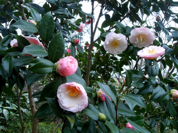 Mamie au jardin Japonais