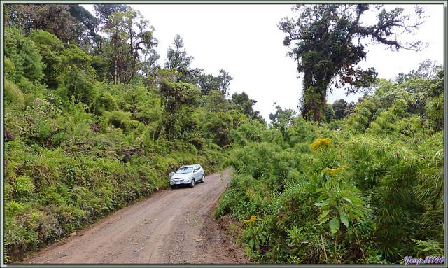 Blog de images-du-pays-des-ours : Images du Pays des Ours (et d'ailleurs ...), Petite accalmie dans le déluge sur la route de San Gerardo de Dota - Costa Rica