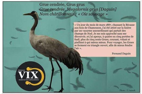 Quelques observations de Fernand Daguin sur des oiseaux observés dans le Châtillonnais...