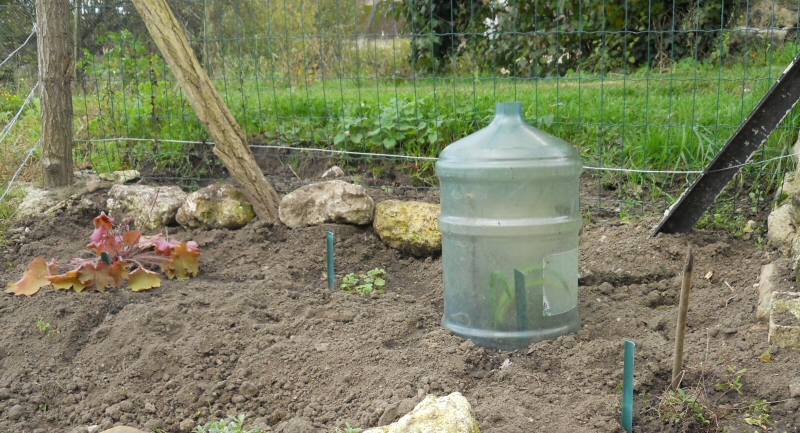 protéger les plantes pour l'hiver - au fil de l'aisne