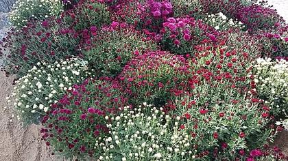 balade au parc floral un bel apres midi d'automne